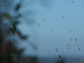 Blue Droplets of Rain on Glass