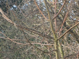 Trees stripped bare of their leaves