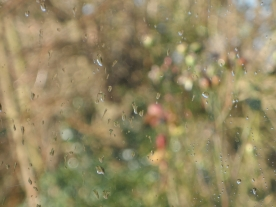 Droplets of rain from a distance