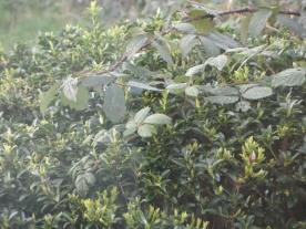A Bush from a distance