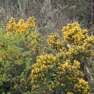 The flowers/bushes/trees of Shirley Hills