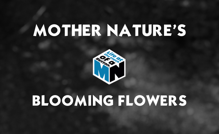 Mother Nature's Blooming Flowers