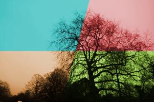 Photographic Experiment #14